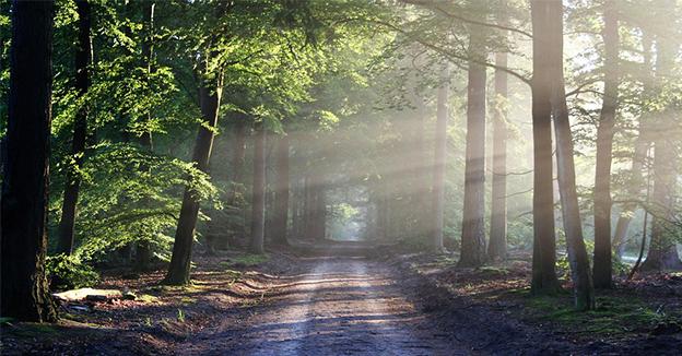 Investir dans un Groupement Foncier Forestier pour réduire vos impôts